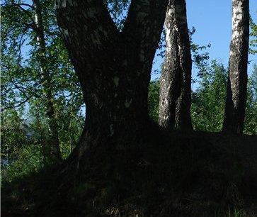 Фрагмент фотографии объекта