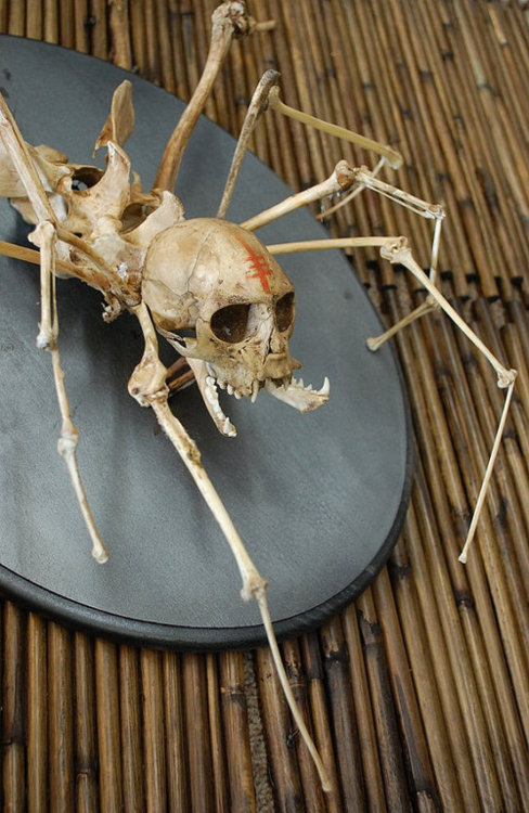 ^^Останки особи SCP-1362, уничтоженной во время _инцидента 1326-█ д-ром Р█████. Сразу после _убийства тело существа быстро разложилось до скелета.^^
