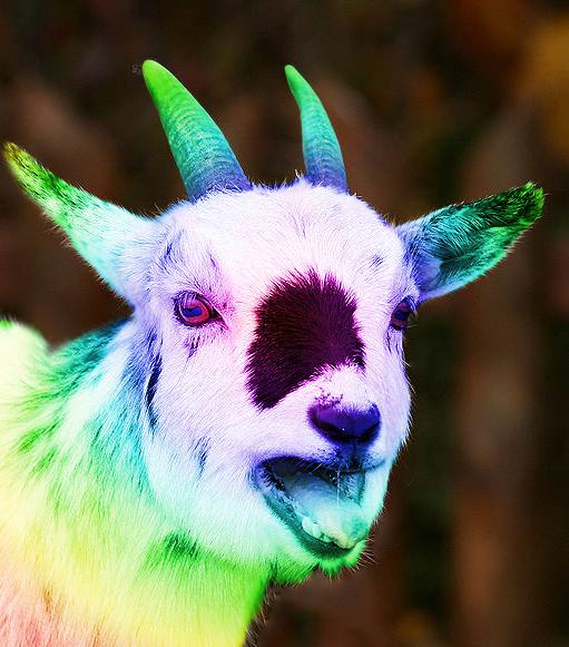 В этой фотографии заключено существо меметической природы, похожее на разноцветного козла. Если Вы успешно прошли обработку мемагентом, то будете способны воспринимать его.