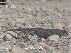 Кадр из фильма Ночь ящерицы-мумии, на котором присутствует SCP-2974