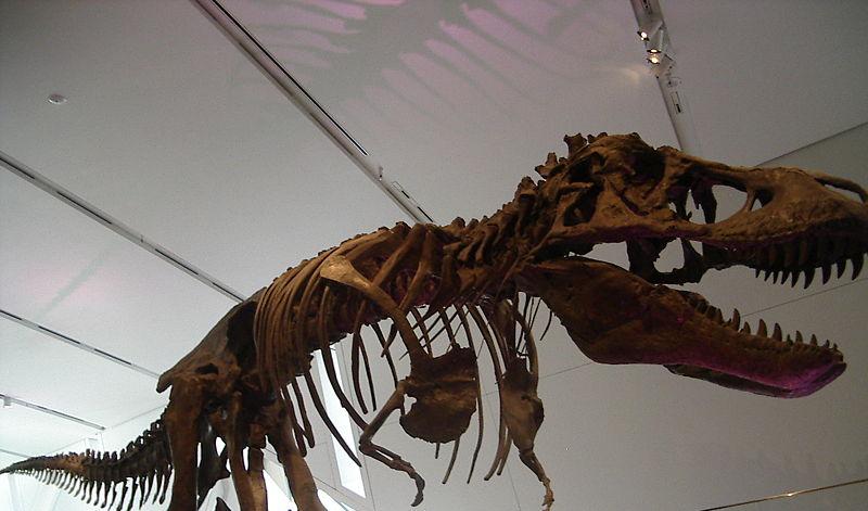 Восстановленный скелет Tyrannosaurus rex, выставленный напоказ в Зоне 11. Обнаружен на территории SCP-4003.|width=300px