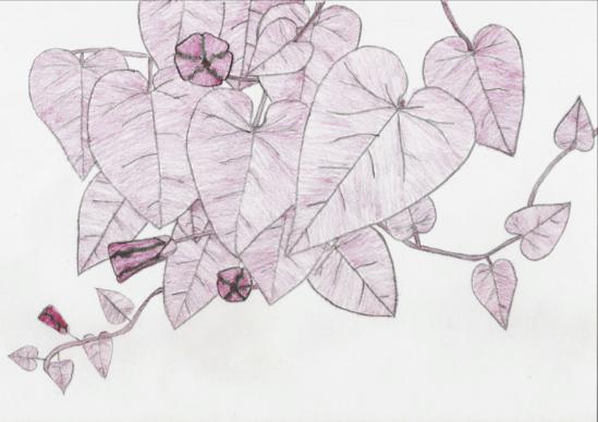 SCP-754 на карандашно-пастельном рисунке